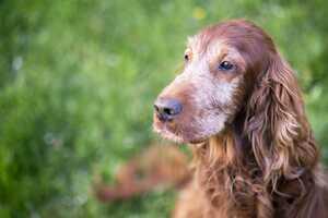 Alter Hund: Wie du gut für deinen Seniorhund sorgst