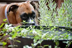 Aromatherapie beim Hund