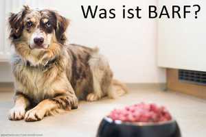 Was ist BARF?