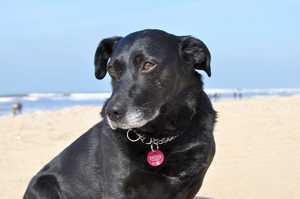 Tierschutzexperten raten vom Urlaub mit Hund in Dänemark ab