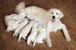 Demodex Milben beim Hund - Wie behandeln?