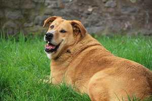 Ist mein Hund zu dick?