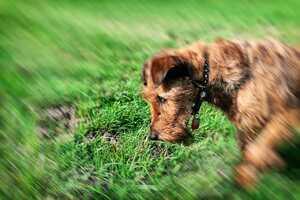 Hund hat Giftköder gefressen: Tipps für den Ernstfall