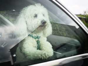 Hund ans Autofahren gewöhnen