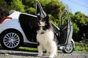 Hund im Auto sicher transportieren