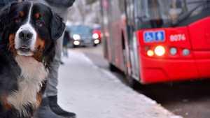 Hunde in öffentlichen Verkehrsmitteln