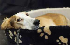 Mit Hund die Coronavirus-Krise gut überstehen