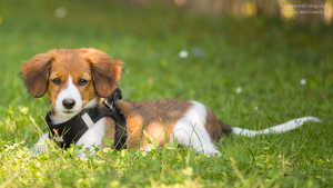 Hundegerechter Garten