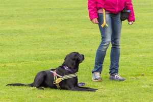 Grundkommandos für deinen Hund