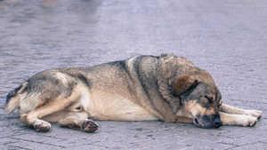 Was tun wenn Hund überhitzt - Hitzefalle Auto