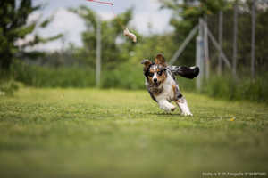 Worauf bei der Wahl der Hundeschule achten?