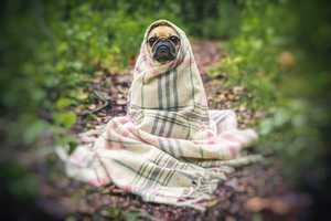 Verstopfung beim Hund: Ursachen, Symptome & Behandlung