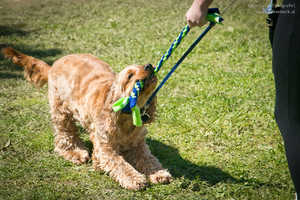 Diese Übungen erleichtern dir das Leben mit deinem Hund