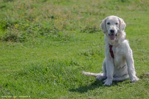 Hunde vor Zecken schützen: Zeckenmittel & Zeckenkrankheiten