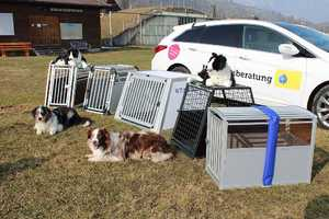 Welche Hundebox f�rs Auto?
