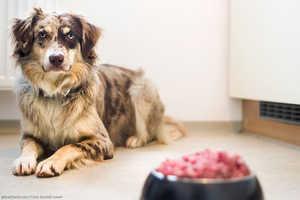 Hundefutter: Nassfutter, Trockenfutter oder Rohfutter