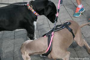 Haftpflichtversicherung für den Hund