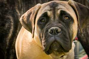 Die größten 10 Fehler, die Hundehalter machen