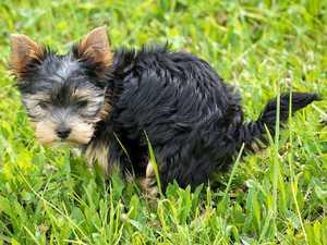 Was Hundekot über die Gesundheit des Hundes aussagt