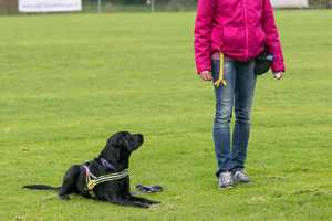 Wie werde ich (erfolgreicher) Hundetrainer?