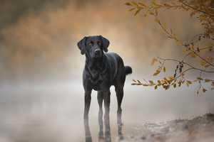 Schwarze Hunde perfekt fotografieren
