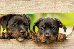 Welche Leistungen beinhalten Tierkrankenversicherungen?