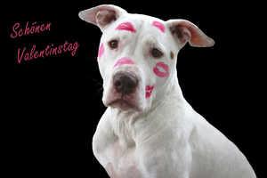 Hundegeschichte zum Valentinstag
