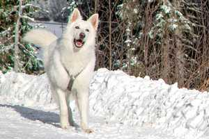 TOP 10 Weihnachtsgeschenke für Hunde