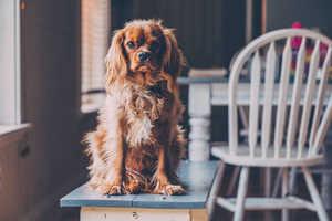 Wohnzimmer Agility für Hunde